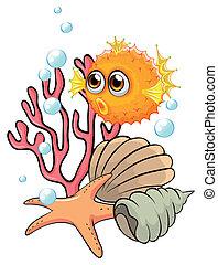 naranja, conchas marinas, pescados del soplador