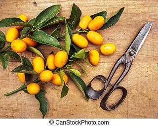 naranja, delicioso, kumquats