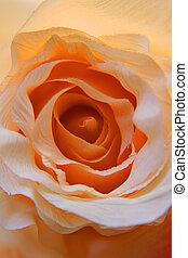 naranja, flor, rosa