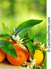 naranja, fruits, y, flowers.