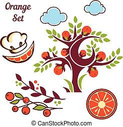 naranja, lindo, conjunto