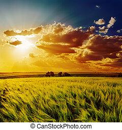 naranja, ocaso, encima, verde, campo