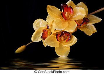 naranja, orquídeas