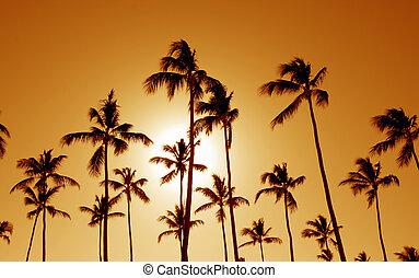 naranja, palma, molde, árboles