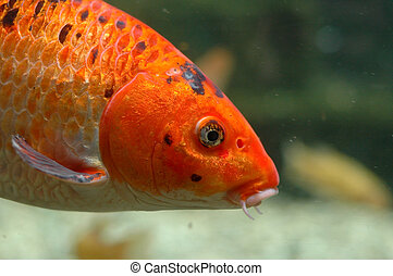 naranja, submarino, pez