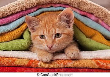 naranja, -, toallas, gatito, pila, lindo, arriba, colorido, ...