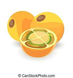 Naranjilla  fruit on white background vector