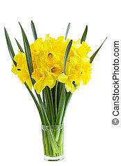 narcis, květiny