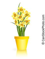 narcis, lentebloemen, gele, gardening.