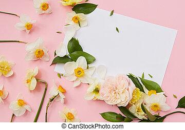 narciso, en, fondo rosa