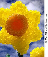 narciso, flor, feito, de, inflado, balões