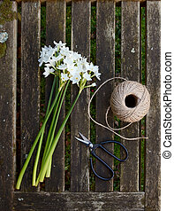 Narcissi stems on wooden bench with twine and scissors