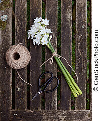Narcissi tied with twine, with garden string and scissors