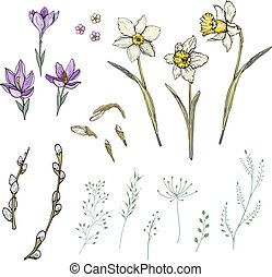 Narcissus and crocus spring floral elements
