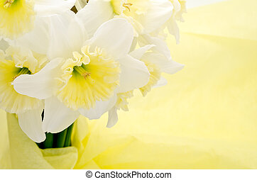 Narcissus bouquet - Close up of Light yellow narcissus...