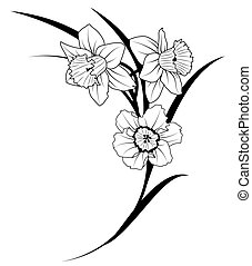 narcissus - vector illustration of narcissus in black and...