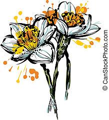 narcissus, flores, três