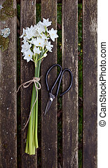 Narcissus flowers tied with twine, next to scissors