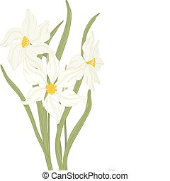 Narcissus. - Vector hand drawn fantasy Narcissus and leaves.