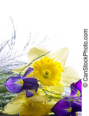 Narcissus with green foliage and a violet iris flower