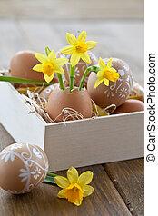 narcyz, powłoka, jajko, żółty