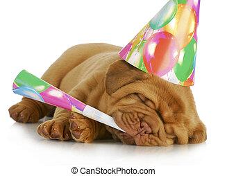 narozeniny, štěně