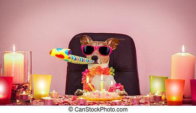 narozeniny, pes, šťastný