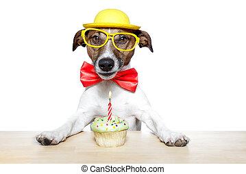 narozeniny, pes, cupcake