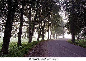 Narrow asphalt suburban road surrounded by linden trees bend sunken alley mystical fog.