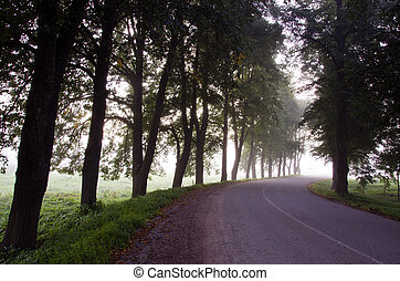narrow asphalt road trees sunk alley mystical fog