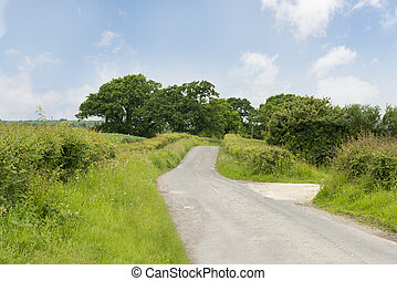 Narrow Country Road with Trees on a Bright Sunny Day