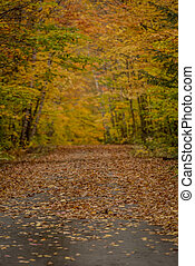 Narrow Focus of Country Lane in Autumn in Maine woods