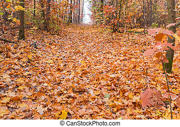 Narrow forest opening covered with fallen leaves