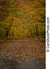 Narrow Lane Awaits a Blanket of Fall Leaves