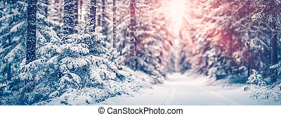 Narrow path in the fairy snowy forest