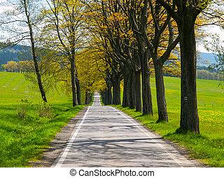 Narrow road on sunny day
