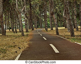 Narrow road through the forest