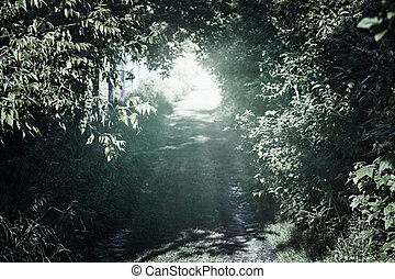Narrow rural road in forest