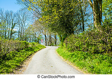 narrow single track country lane bordered by hedges in Cumbria England