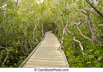 Narrow way entering the tropical creeks and mangrove swamps ...