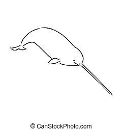Narwhal illustration, drawing, engraving, ink, line art, vector.narwhal vector sketch illustration