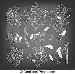 narzissen, frühjahrsblumen, leaves., sammlung