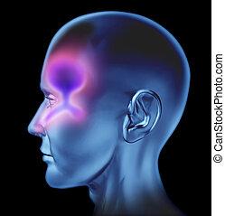 nasal, humano, congestión