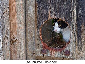 nascosto, gatto