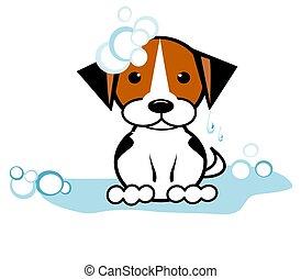 nasse, junger hund, pfütze