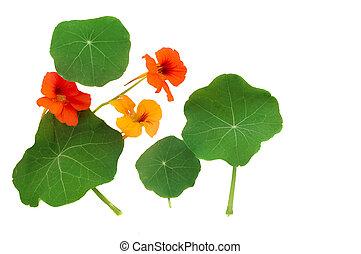Nasturtium Leaves and Flowers - Nasturtium leaves and ...