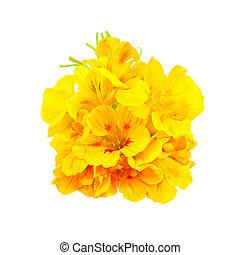 Nasturtium yellow bouquet