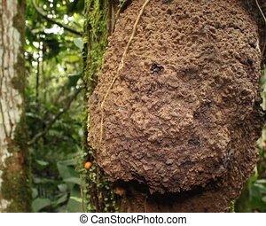 Nasute termites defending their ne - In tropical rainforest,...
