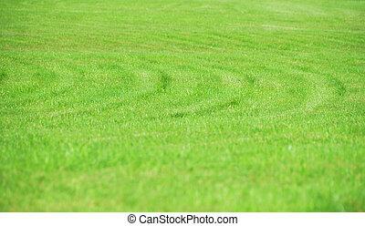 natürlich, abstrakt, gras, hintergrund