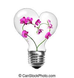 natürlich, energie, concept., glühlampe, mit, orchideen, form, von, herz, freigestellt, weiß